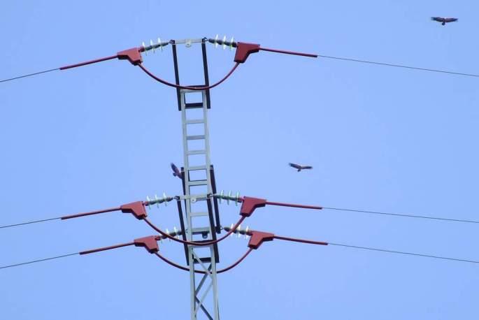 Apoyo con medidas correctoras. Con el aislamiento de los conductores se consigue que un ave no pueda tocar ningún cable desnudo estando posada en la torreta eléctrica. Varios buitres leonados sobrevuelan la instalación aislada.