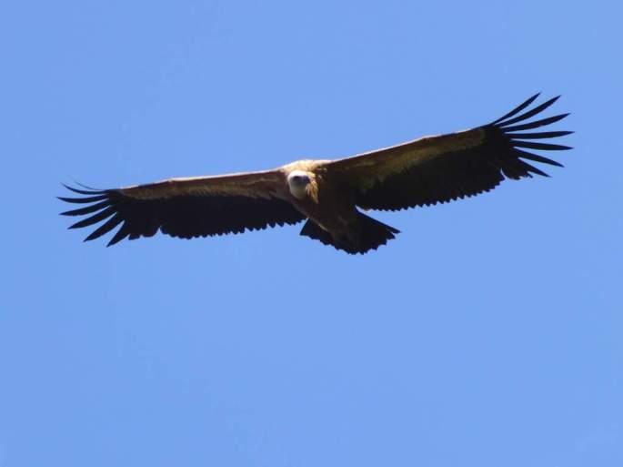 EL buitre Estepona en su juventud volo libre e inició la aventura del viaje a África