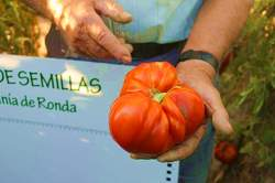 mini_banco_de_semillas_tomate