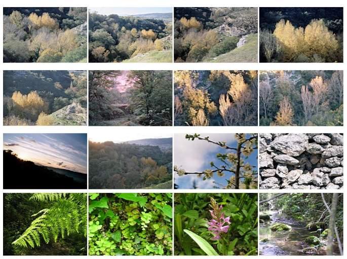 Varias visiones del Arroyo de la Ventilla, con la óptica de Paco Marín
