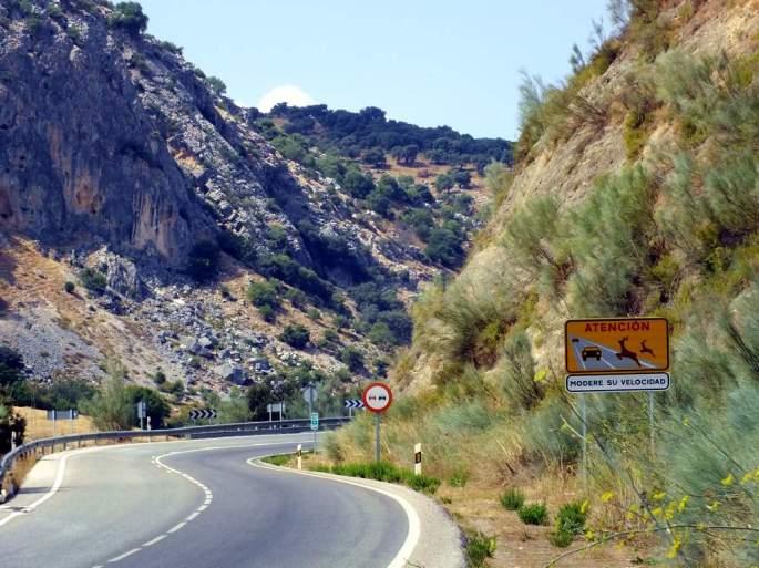 Respetar los avisos de las señales de paso de fauna silvestre ayuda a evitar atropellos. Zona con alta biodiversidad.