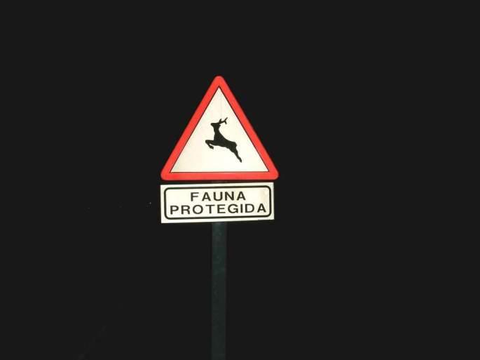 Las señales que avisan del paso de fauna silvestre son escasas, pero deben ser tenidas muy en cuenta, especialmente en la conducción nocturna.