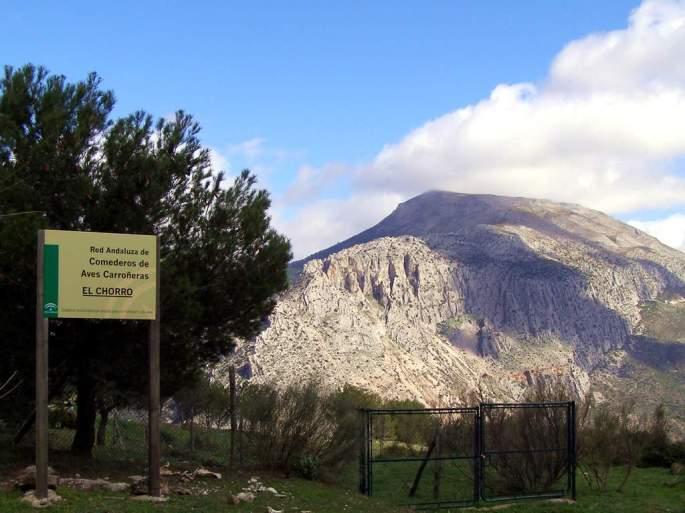 Este comedero fue establecido por la asociación hace más de 30 años y está integrado en el Programa de Conservación de las Aves Necrófagas en Andalucía