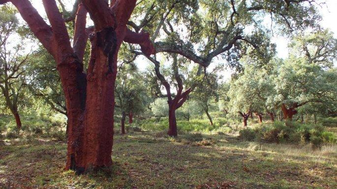 Algunos ejemplares de este bosque son de gran porte