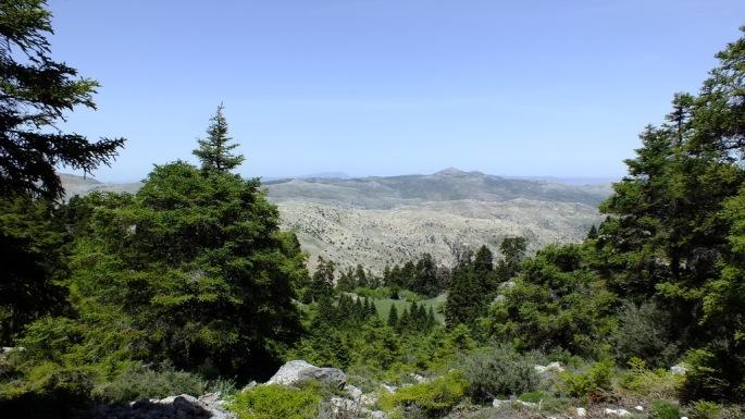 Pinsapo en el Parque Natural Sierra de las Nieves