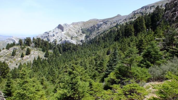 Bosque de Pinsapos en la Cañada de las Ánimas