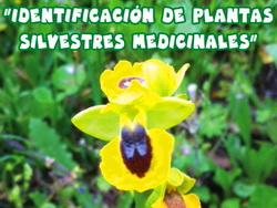 Marcha plantas medicinales - Min