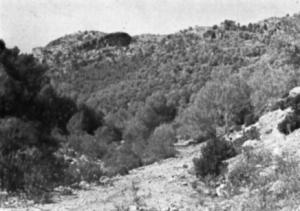 Arroyo de los Horcajos